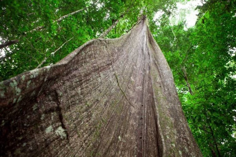 Lesser Known Timber Species
