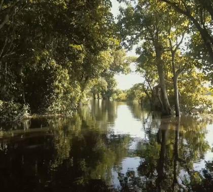 HOE WERKT DUURZAAM BOSBEHEER IN HET AMAZONEWOUD?